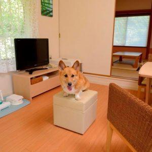 ルネッサ城ヶ崎のぺットと泊まれる部屋