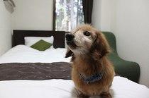一里野高原ホテルろあんのぺットと泊まれる部屋