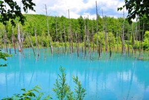 白金青い池(北海道・美瑛)