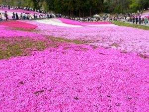 羊山公園(埼玉県のおすすめ観光スポット)