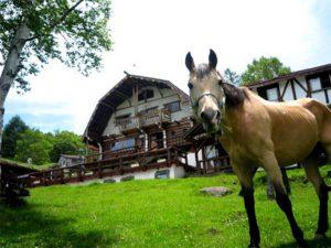 白樺湖ホープ・ロッヂ乗馬牧場