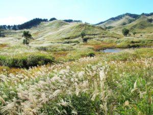 砥峰高原のススキの大平原(兵庫県のおすすめ観光スポット)
