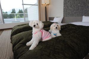 ホテルフォレスタのペットと泊まれる部屋