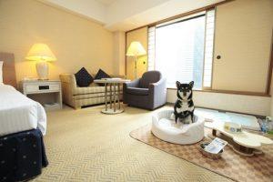 ヒルトン東京のペットと泊まれる部屋
