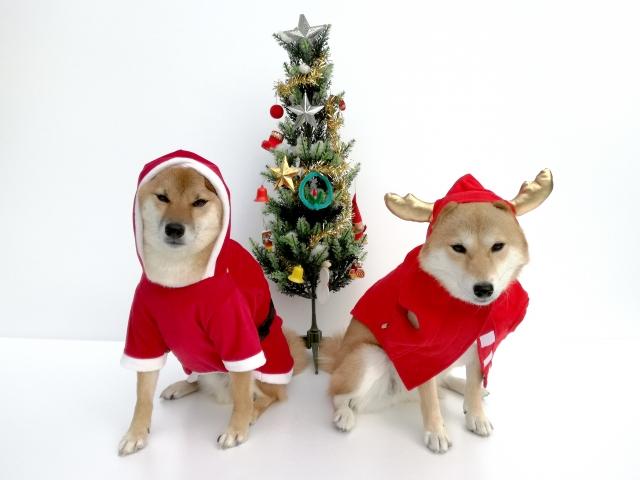 犬用サンタ服
