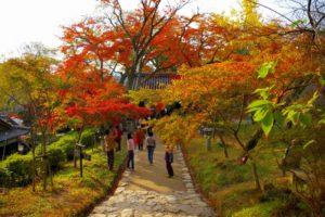 秋月杉の馬場(福岡県の桜の観光名所)