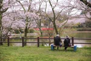 甘木公園(福岡県の桜の観光名所)