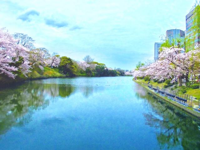 舞鶴公園(福岡県の桜の観光名所)