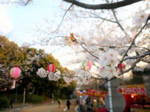 西公園(福岡県の桜の観光名所)